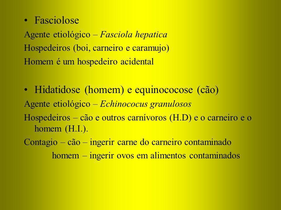 Hidatidose (homem) e equinococose (cão)