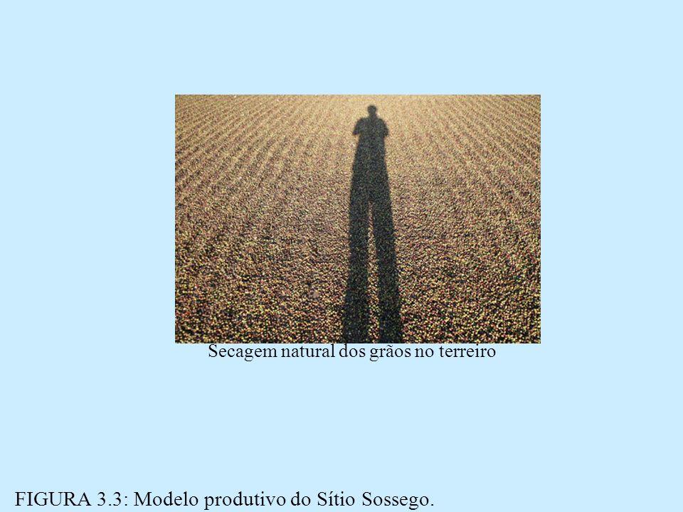 Secagem natural dos grãos no terreiro
