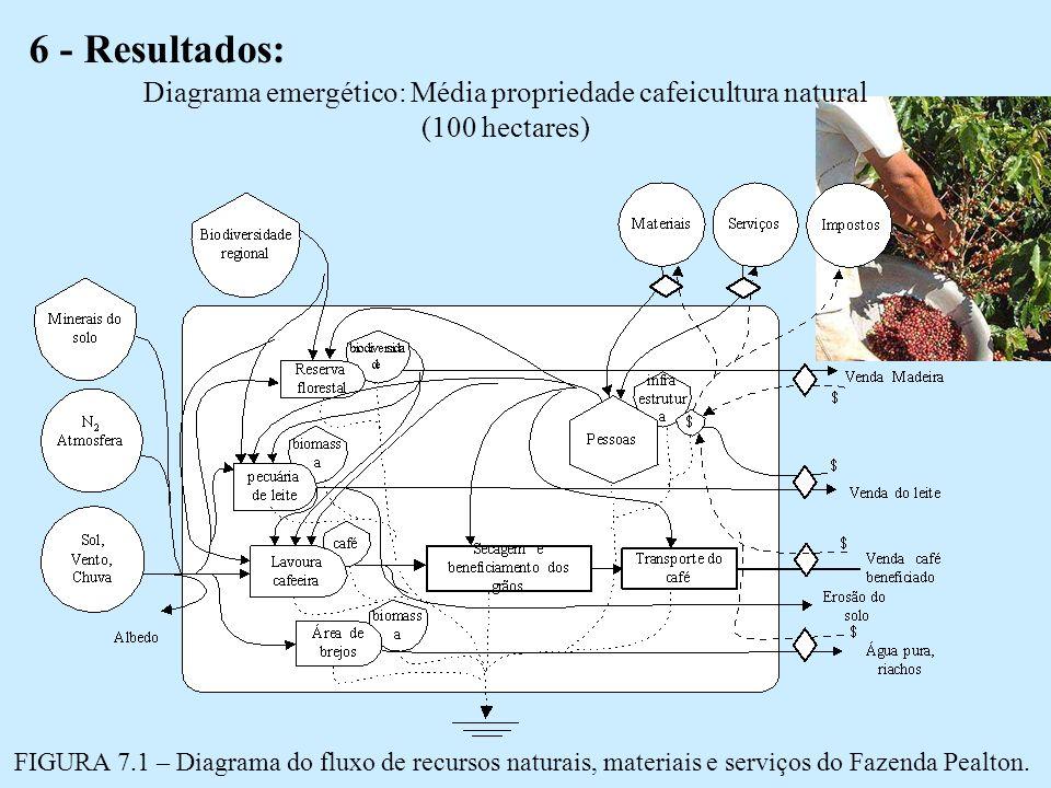 Diagrama emergético: Média propriedade cafeicultura natural