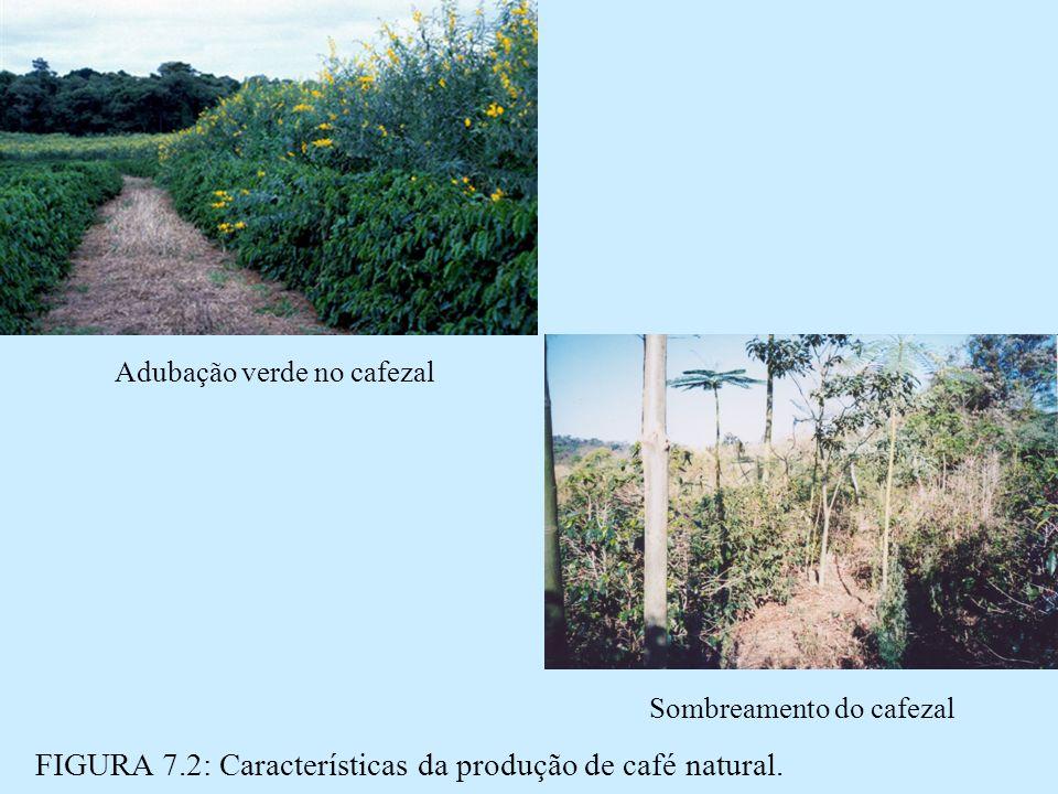 FIGURA 7.2: Características da produção de café natural.
