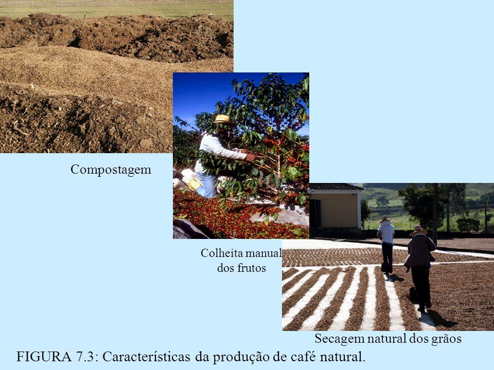 FIGURA 7.3: Características da produção de café natural.