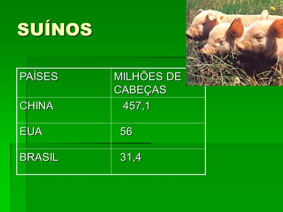 SUÍNOS PAÍSES MILHÕES DE CABEÇAS CHINA 457,1 EUA 56 BRASIL 31,4