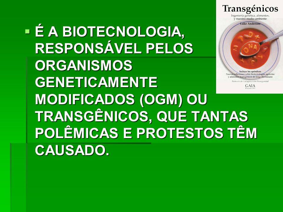 É A BIOTECNOLOGIA, RESPONSÁVEL PELOS ORGANISMOS GENETICAMENTE MODIFICADOS (OGM) OU TRANSGÊNICOS, QUE TANTAS POLÊMICAS E PROTESTOS TÊM CAUSADO.