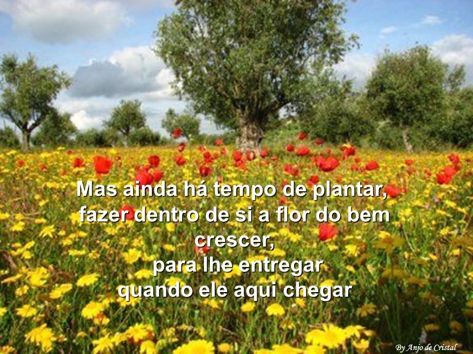 Mas ainda há tempo de plantar, fazer dentro de si a flor do bem