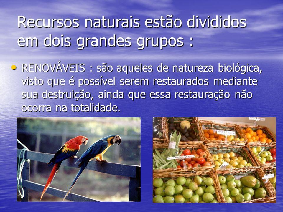 Recursos naturais estão divididos em dois grandes grupos :