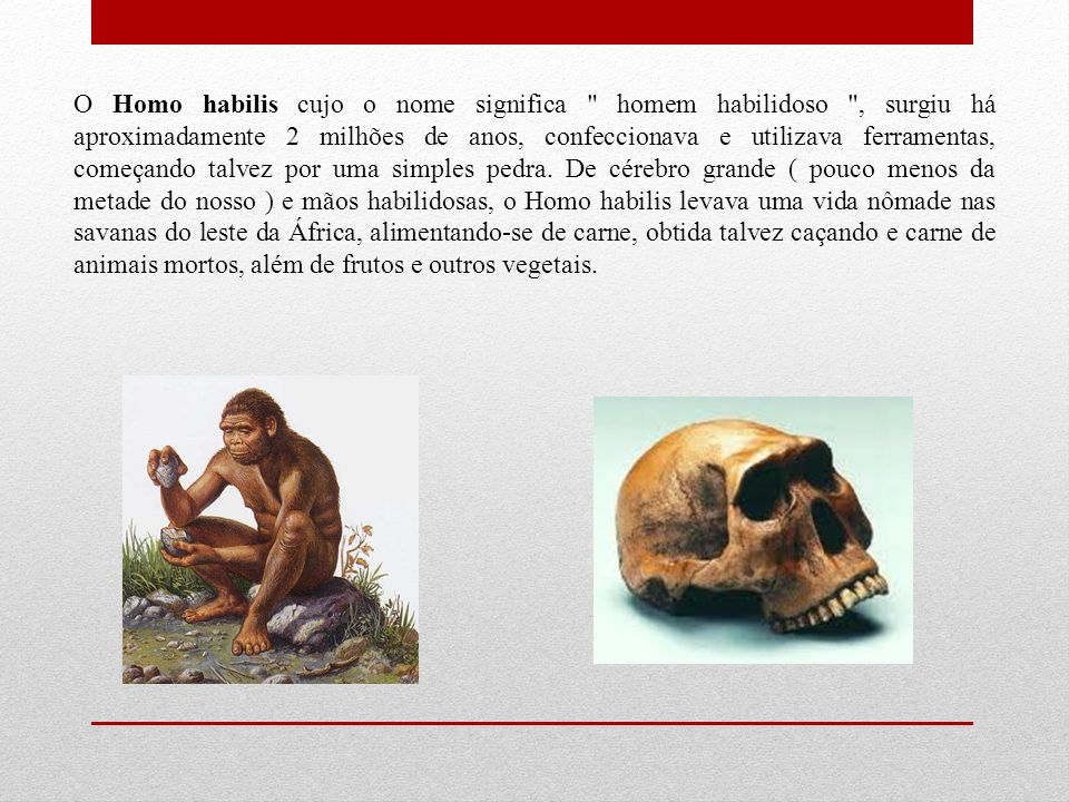 O Homo habilis cujo o nome significa homem habilidoso , surgiu há aproximadamente 2 milhões de anos, confeccionava e utilizava ferramentas, começando talvez por uma simples pedra.