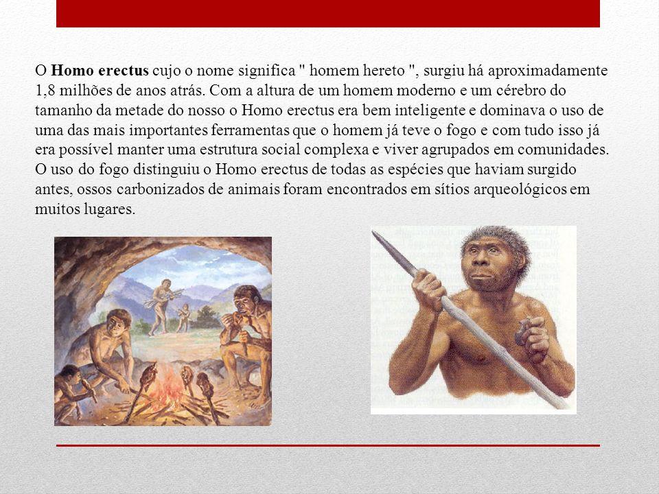 O Homo erectus cujo o nome significa homem hereto , surgiu há aproximadamente 1,8 milhões de anos atrás.