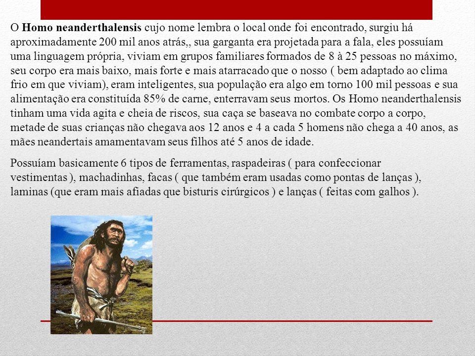 O Homo neanderthalensis cujo nome lembra o local onde foi encontrado, surgiu há aproximadamente 200 mil anos atrás,, sua garganta era projetada para a fala, eles possuíam uma linguagem própria, viviam em grupos familiares formados de 8 à 25 pessoas no máximo, seu corpo era mais baixo, mais forte e mais atarracado que o nosso ( bem adaptado ao clima frio em que viviam), eram inteligentes, sua população era algo em torno 100 mil pessoas e sua alimentação era constituída 85% de carne, enterravam seus mortos. Os Homo neanderthalensis tinham uma vida agita e cheia de riscos, sua caça se baseava no combate corpo a corpo, metade de suas crianças não chegava aos 12 anos e 4 a cada 5 homens não chega a 40 anos, as mães neandertais amamentavam seus filhos até 5 anos de idade.