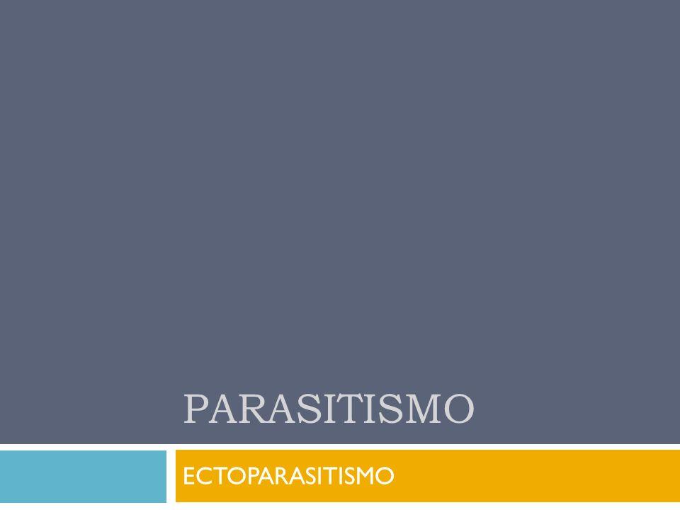 PARASITISMO ECTOPARASITISMO