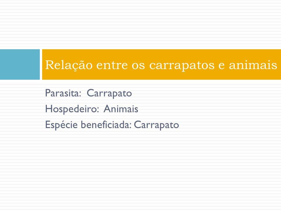 Relação entre os carrapatos e animais