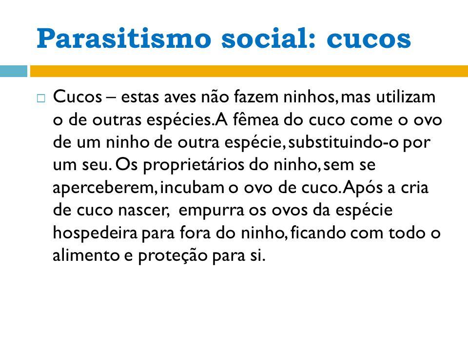 Parasitismo social: cucos
