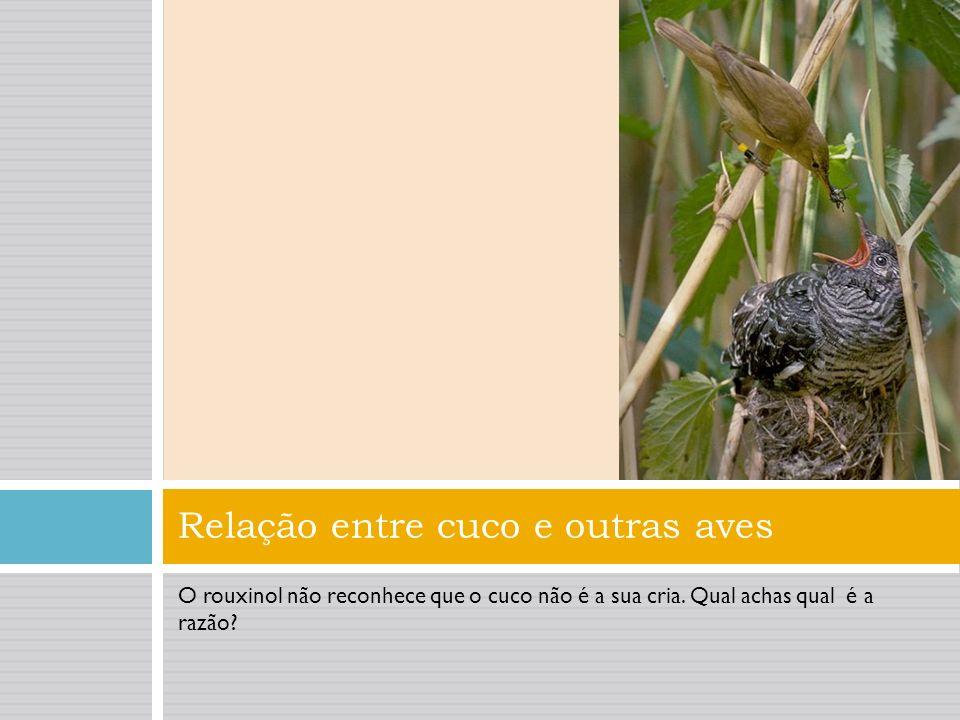 Relação entre cuco e outras aves