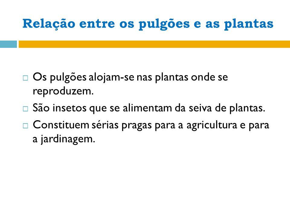 Relação entre os pulgões e as plantas