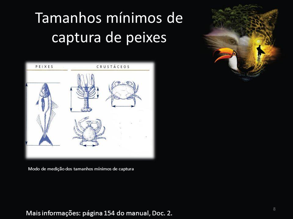Tamanhos mínimos de captura de peixes