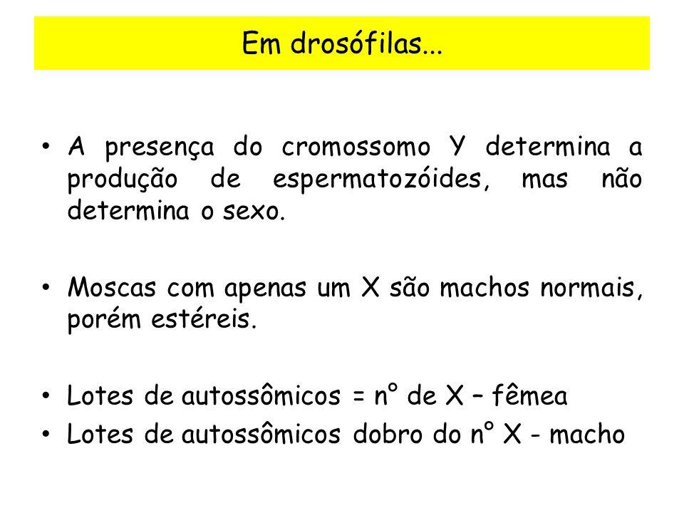 Em drosófilas... A presença do cromossomo Y determina a produção de espermatozóides, mas não determina o sexo.