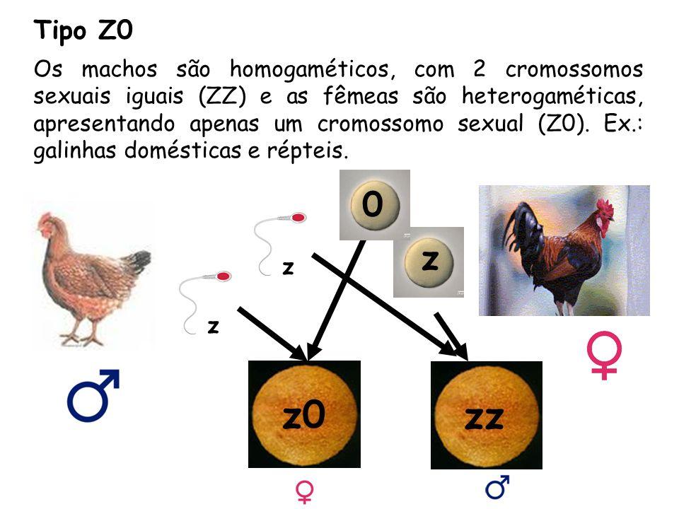 Tipo Z0