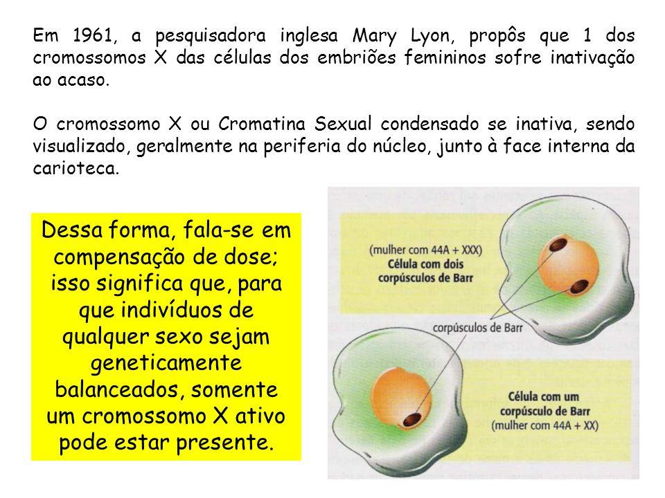 Em 1961, a pesquisadora inglesa Mary Lyon, propôs que 1 dos cromossomos X das células dos embriões femininos sofre inativação ao acaso.