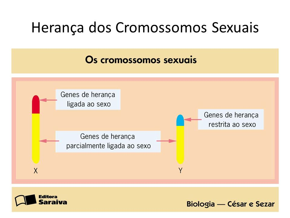 Herança dos Cromossomos Sexuais