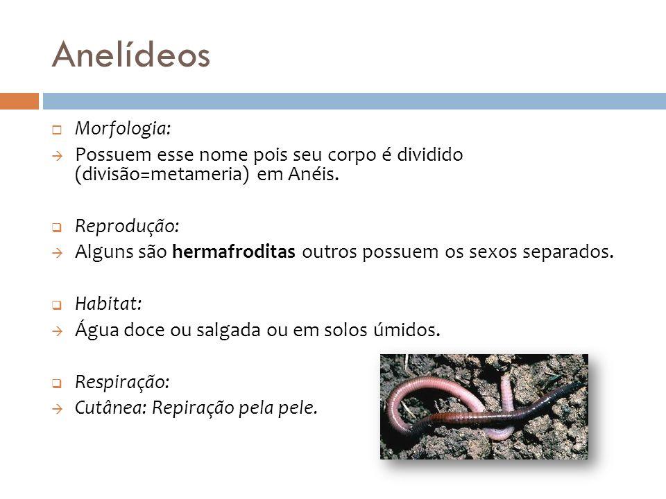 Anelídeos Morfologia: