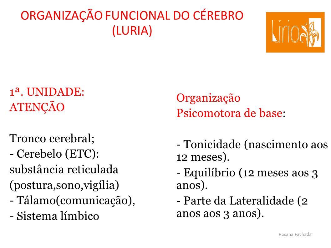 ORGANIZAÇÃO FUNCIONAL DO CÉREBRO (LURIA)