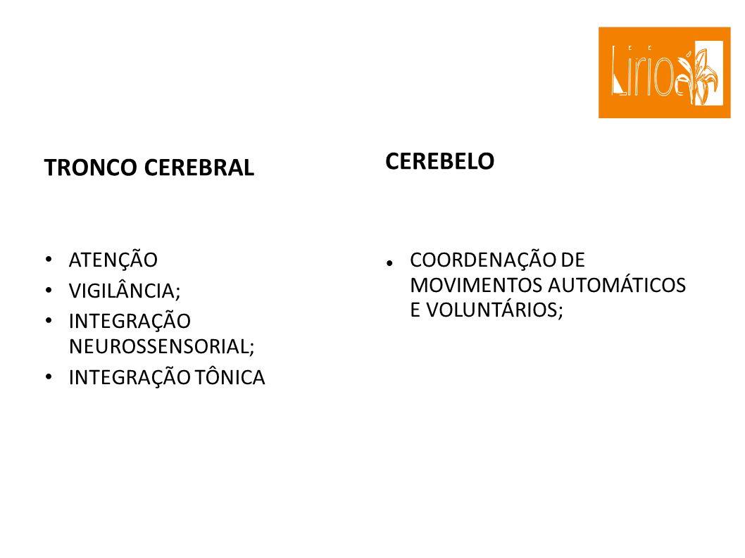 TRONCO CEREBRAL CEREBELO ATENÇÃO VIGILÂNCIA;