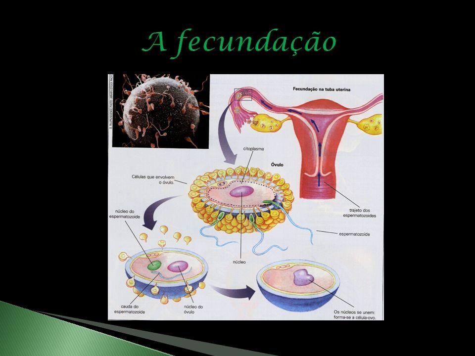 A fecundação