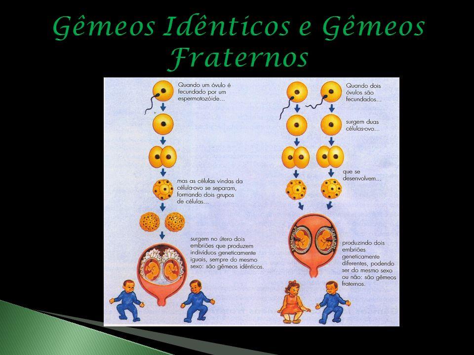 Gêmeos Idênticos e Gêmeos Fraternos