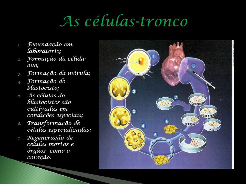 As células-tronco Fecundação em laboratório; Formação da célula- ovo;