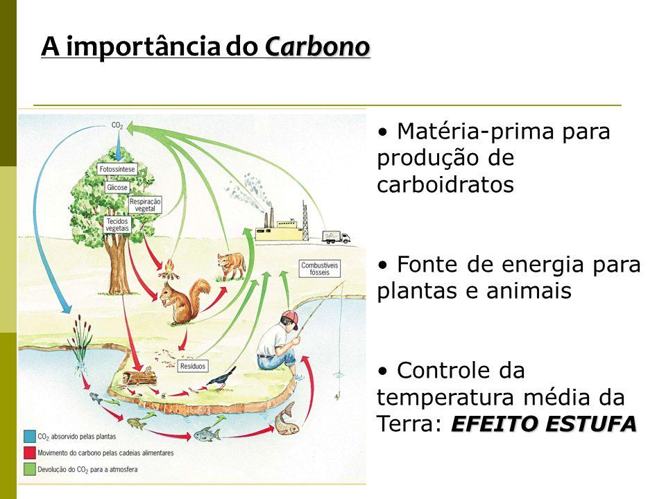 A importância do Carbono