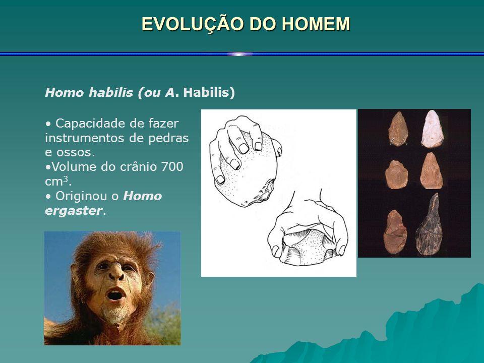 EVOLUÇÃO DO HOMEM Homo habilis (ou A. Habilis)