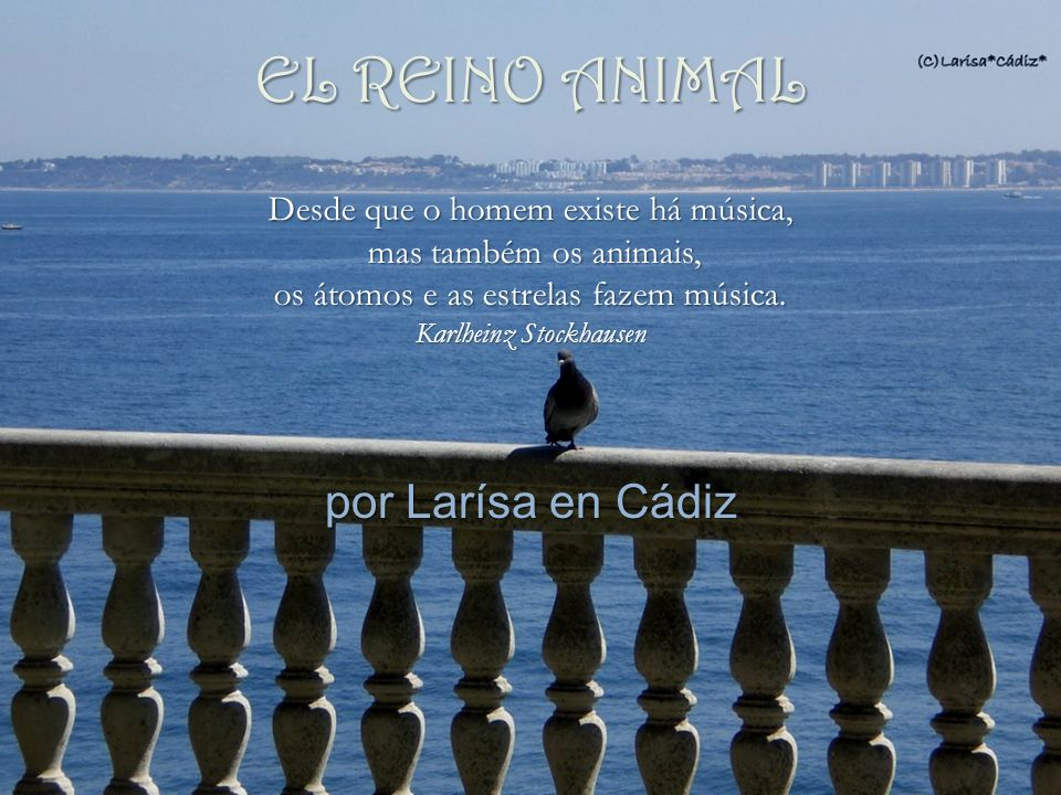 EL REINO ANIMAL por Larísa en Cádiz