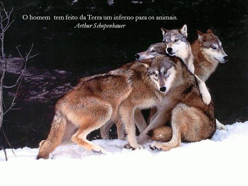O homem tem feito da Terra um inferno para os animais.