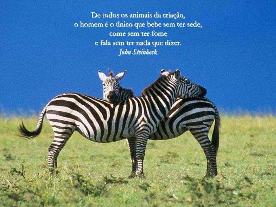 De todos os animais da criação,