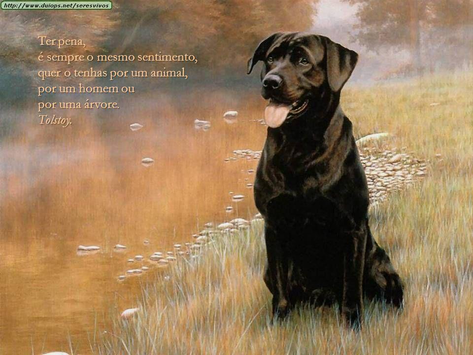 Ter pena, é sempre o mesmo sentimento, quer o tenhas por um animal, por um homem ou. por uma árvore.