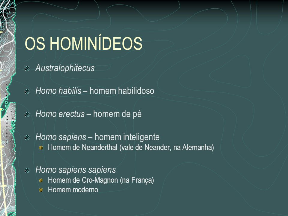 OS HOMINÍDEOS Australophitecus Homo habilis – homem habilidoso