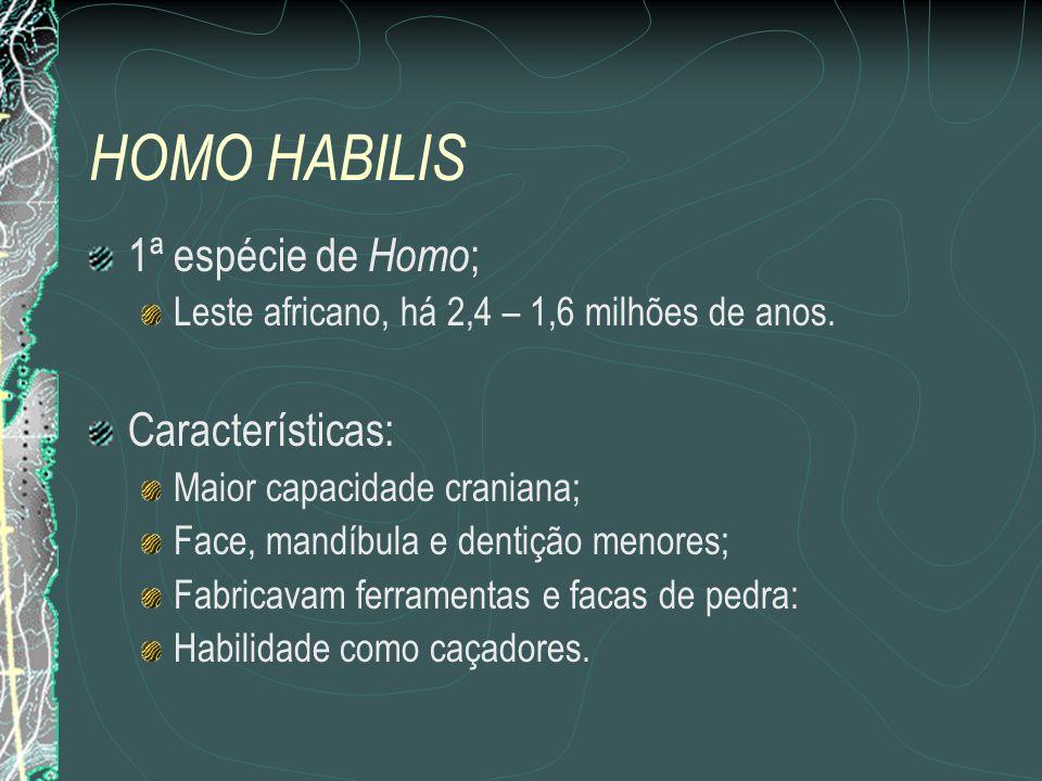 HOMO HABILIS 1ª espécie de Homo; Características: