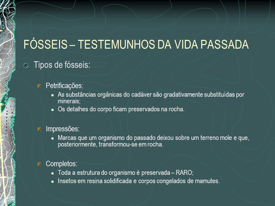 FÓSSEIS – TESTEMUNHOS DA VIDA PASSADA