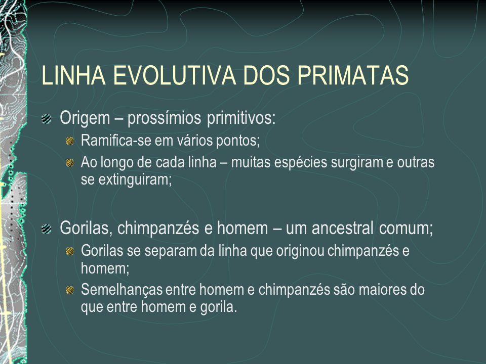 LINHA EVOLUTIVA DOS PRIMATAS