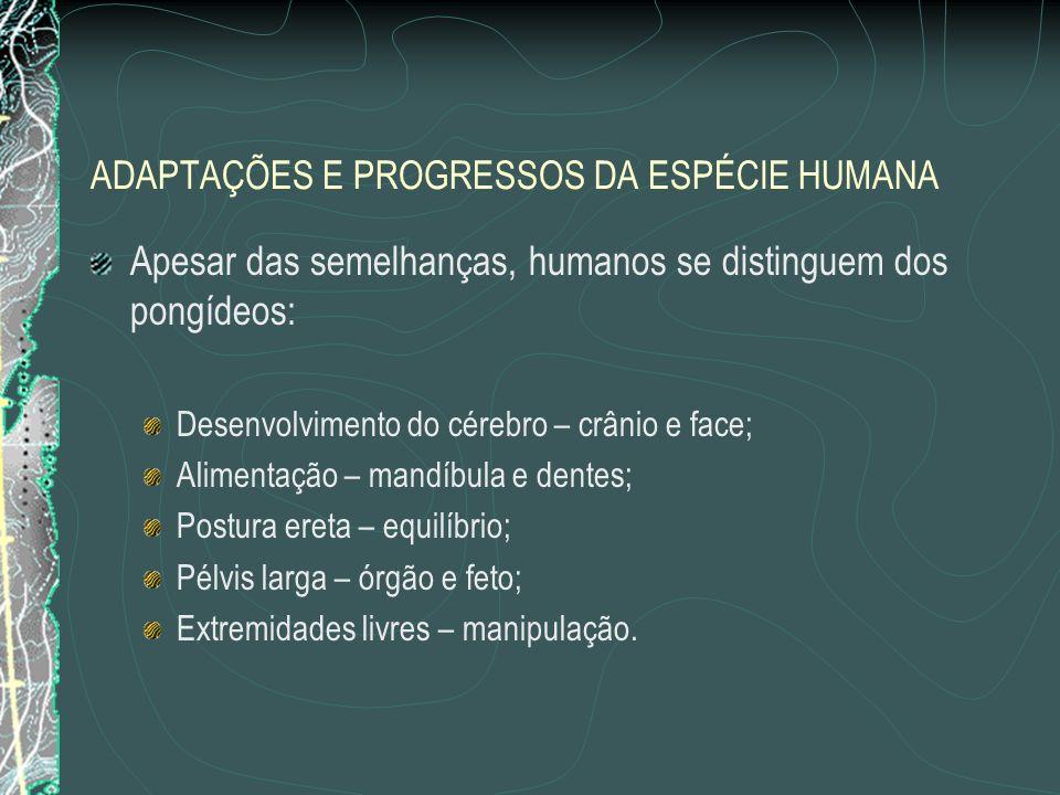 ADAPTAÇÕES E PROGRESSOS DA ESPÉCIE HUMANA