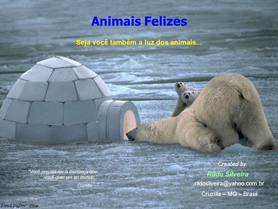 Seja você também a luz dos animais...