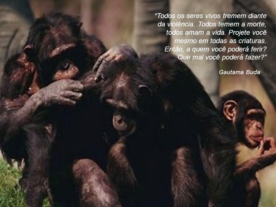Todos os seres vivos tremem diante da violência
