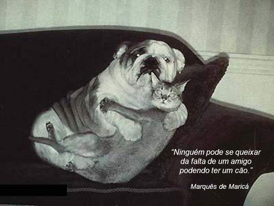 Ninguém pode se queixar da falta de um amigo podendo ter um cão.