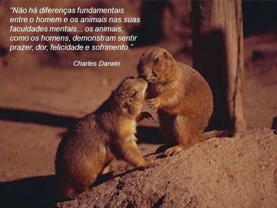 Não há diferenças fundamentais entre o homem e os animais nas suas faculdades mentais... os animais, como os homens, demonstram sentir prazer, dor, felicidade e sofrimento.