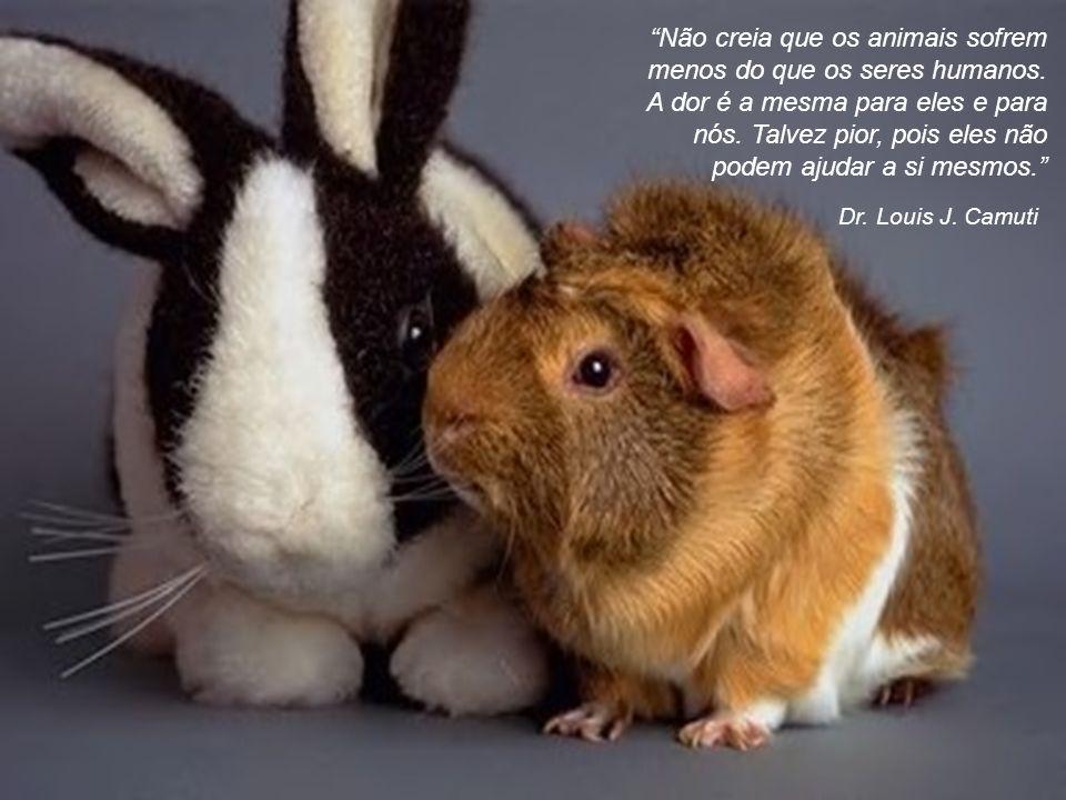 Não creia que os animais sofrem menos do que os seres humanos