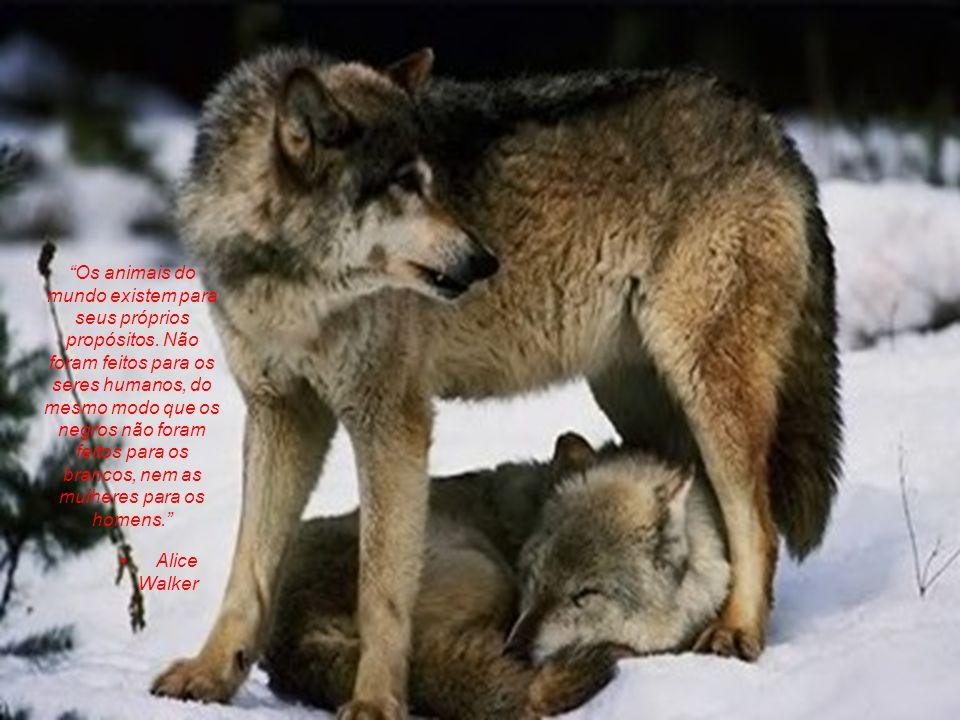 Os animais do mundo existem para seus próprios propósitos