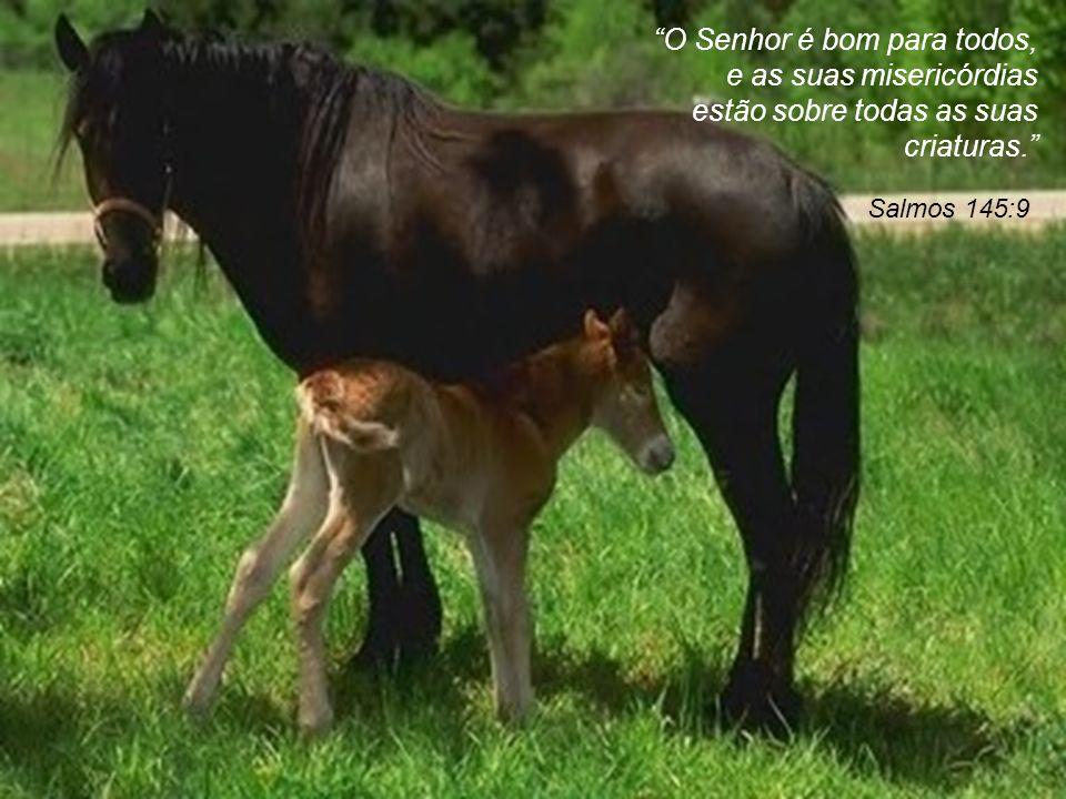 O Senhor é bom para todos, e as suas misericórdias estão sobre todas as suas criaturas.