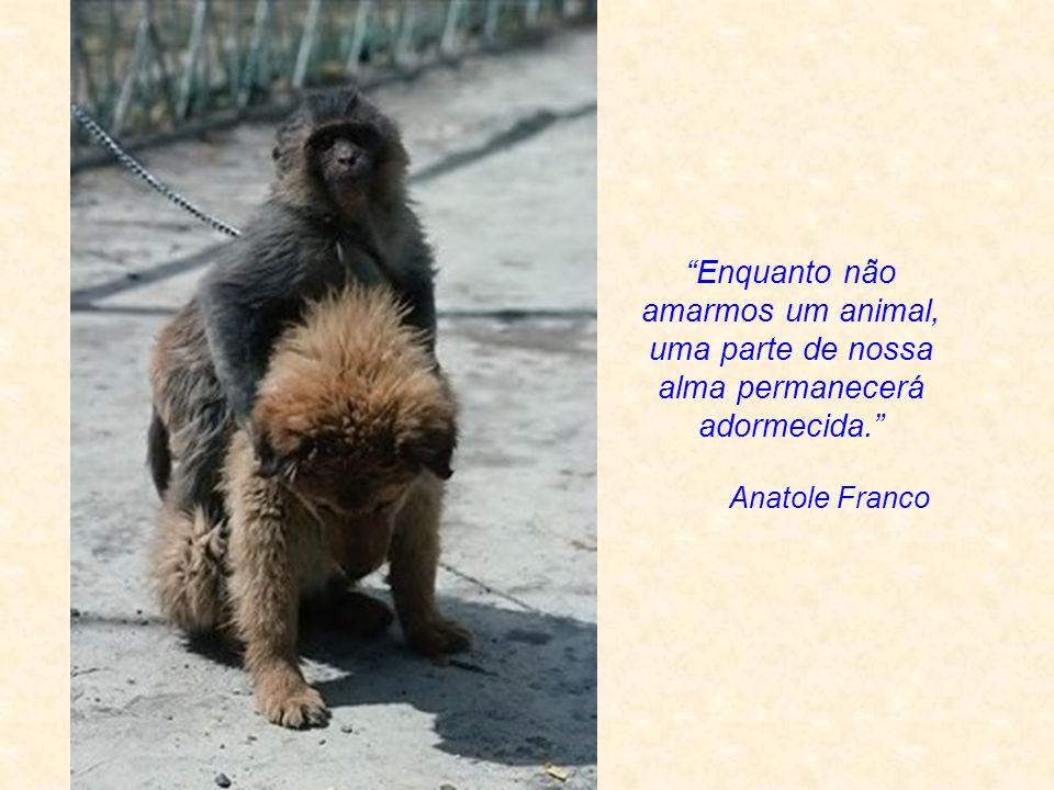 Enquanto não amarmos um animal, uma parte de nossa alma permanecerá adormecida.