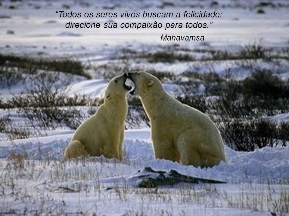 Todos os seres vivos buscam a felicidade; direcione sua compaixão para todos.