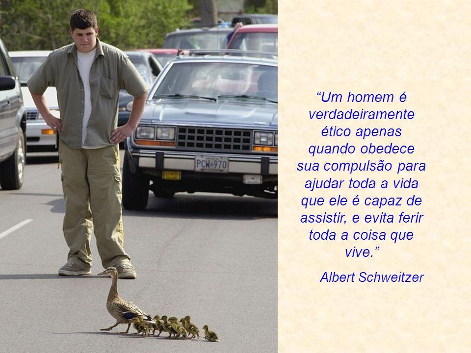 Um homem é verdadeiramente ético apenas quando obedece sua compulsão para ajudar toda a vida que ele é capaz de assistir, e evita ferir toda a coisa que vive.