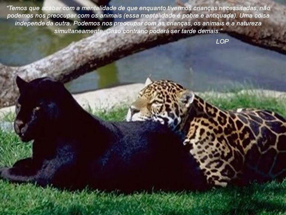 Temos que acabar com a mentalidade de que enquanto tivermos crianças necessitadas, não podemos nos preocupar com os animais (essa mentalidade é pobre e antiquada). Uma coisa independe da outra. Podemos nos preocupar com as crianças, os animais e a natureza simultaneamente. Caso contrário poderá ser tarde demais.